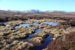 Peatland